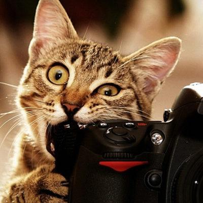 fotography1