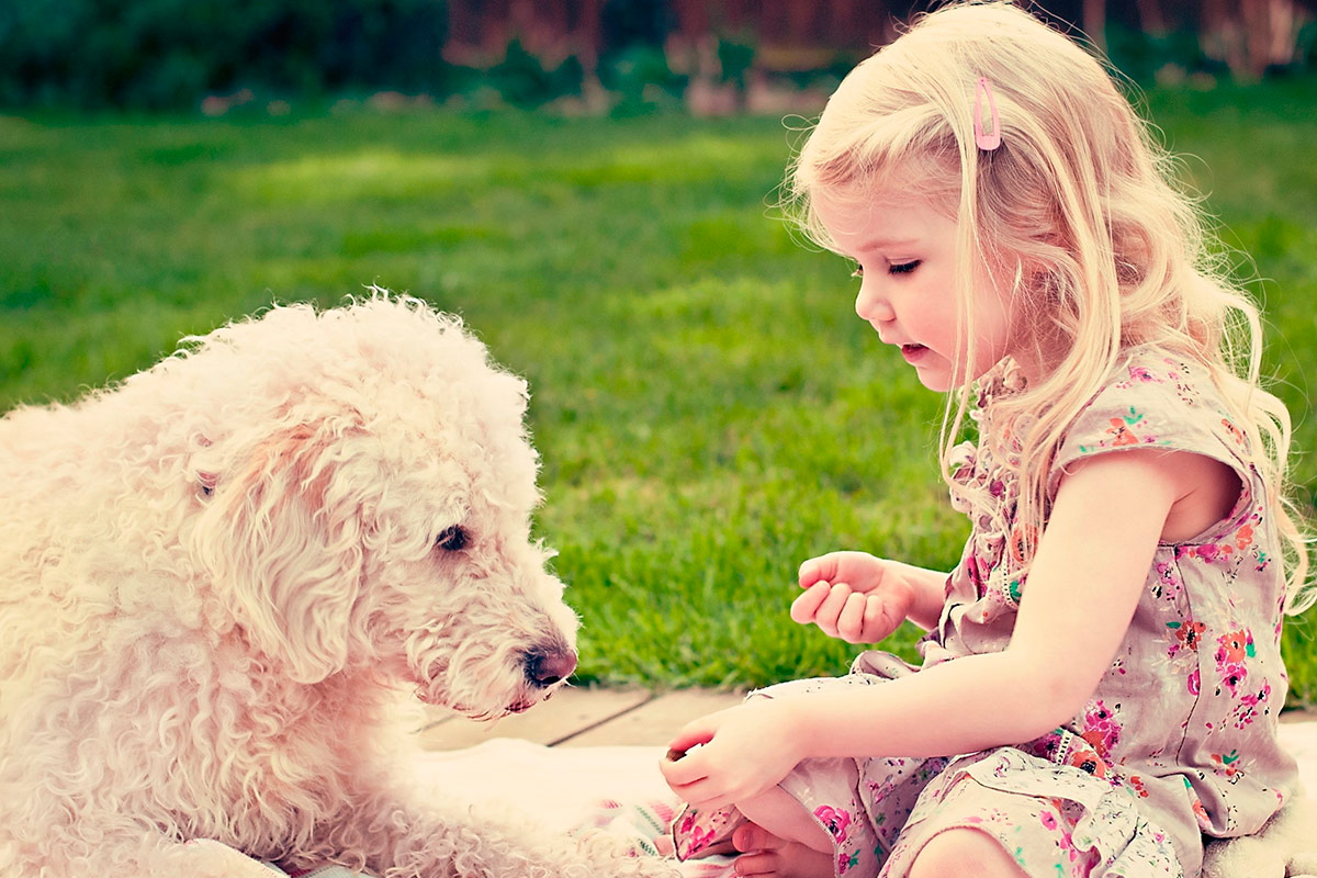 Купить собаку в Перми