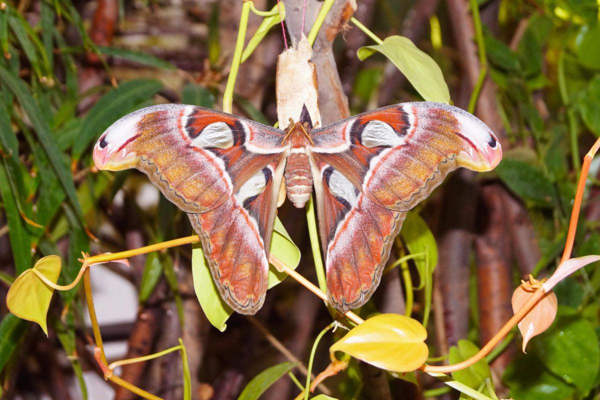 Посетить с ребенком Парк живых бабочек