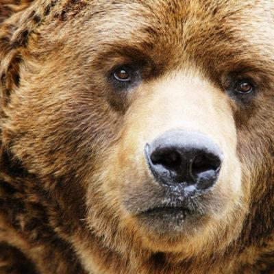 istoria-medvedia