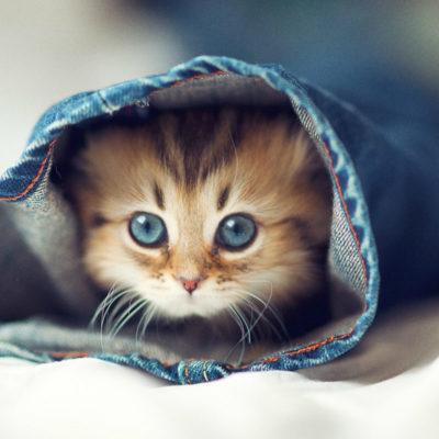 Купить котенка в Перми
